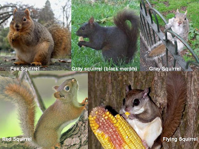 Wild Birds Unlimited: How many species of squirrels are in Michigan?