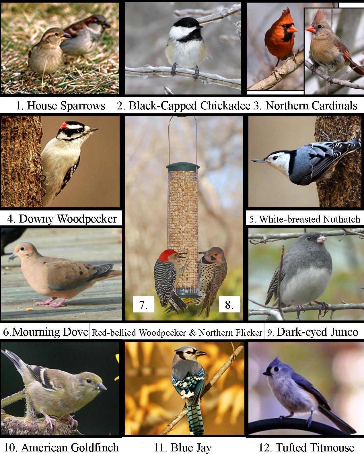 Wild Birds Unlimited: Michigan's Top 20 Winter Backyard Birds
