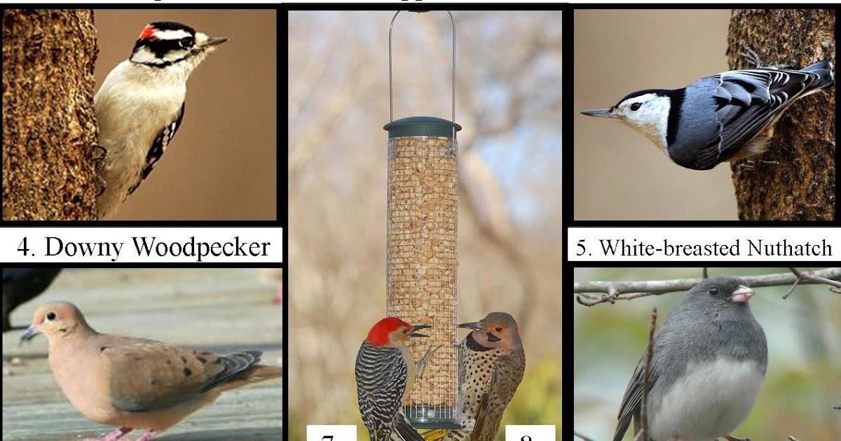 #FeedtheBirds 1: Most common winter birds in Michigan