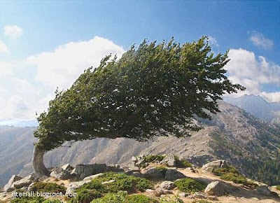 Weird Unusual Tree Pictures