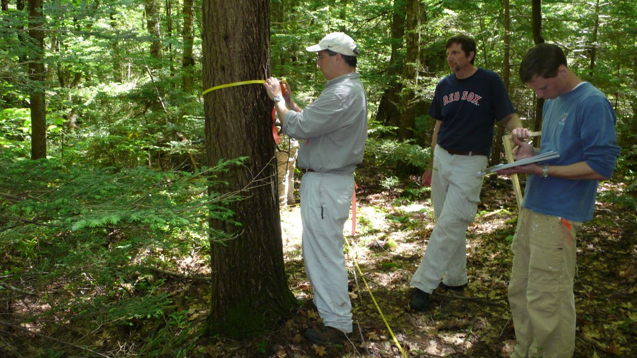 Center For Tropical Forest Science: Harvard Forest Plot ...