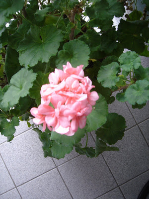 SUE\'S ESCAPE FROM CANCERLAND: Indoor garden