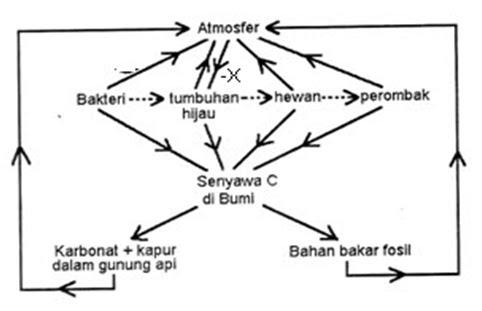 Diagram daur fosfor ccuart Image collections