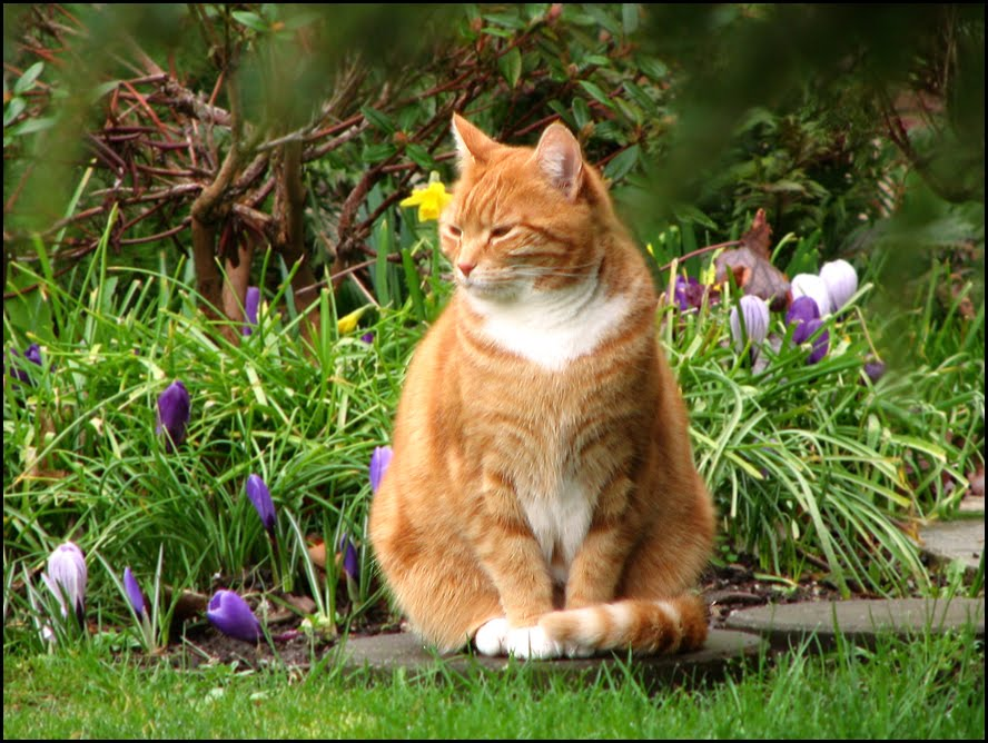 5 Important Pet Tips For Spring Petswelcome Com
