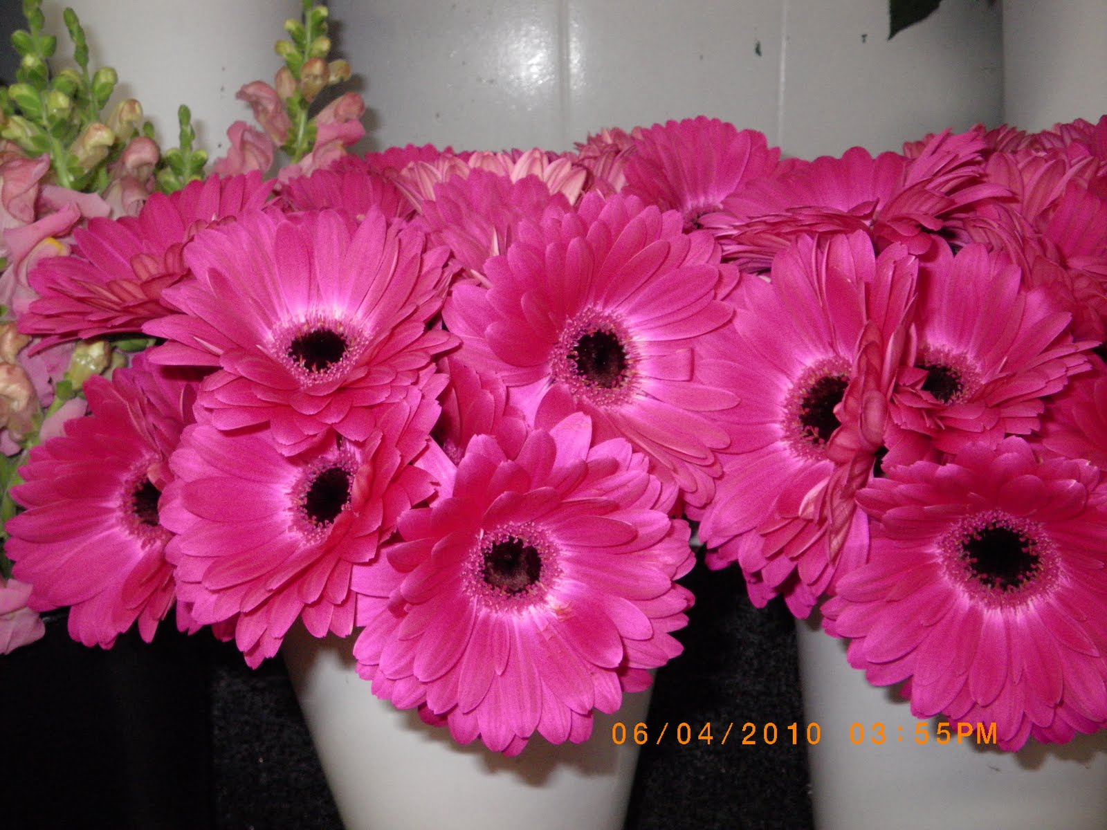 The Story Of Quik Pik Flowers: Check Out The Gerbera Daisy