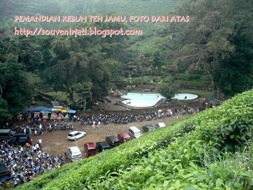 Gambar Kebun Teh Jamus Ngawi Bojonegoro Ekspose Kebun Teh Jamus Ngawi
