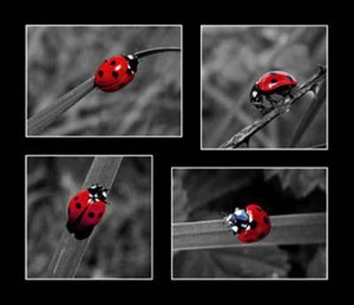 hermosa imagen de insecto color rojo con puntos rojos