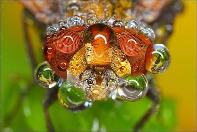 imagenes de insectos cubiertos en rocio
