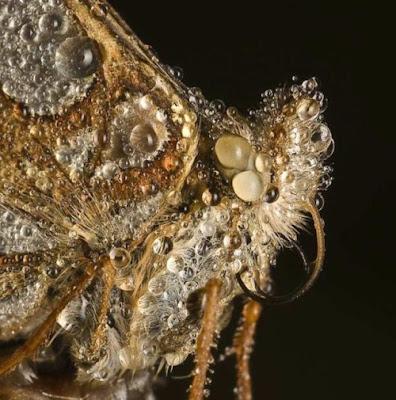 fotografia de insecto cubierto de rocio