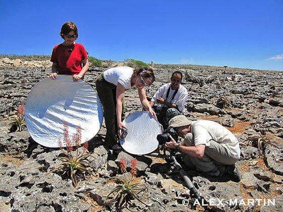Oriol Alamany fotografiando los endémicos Aloe perryi Isla de Socotra Yemen