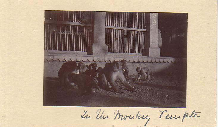 Monkey Temple Varanasi