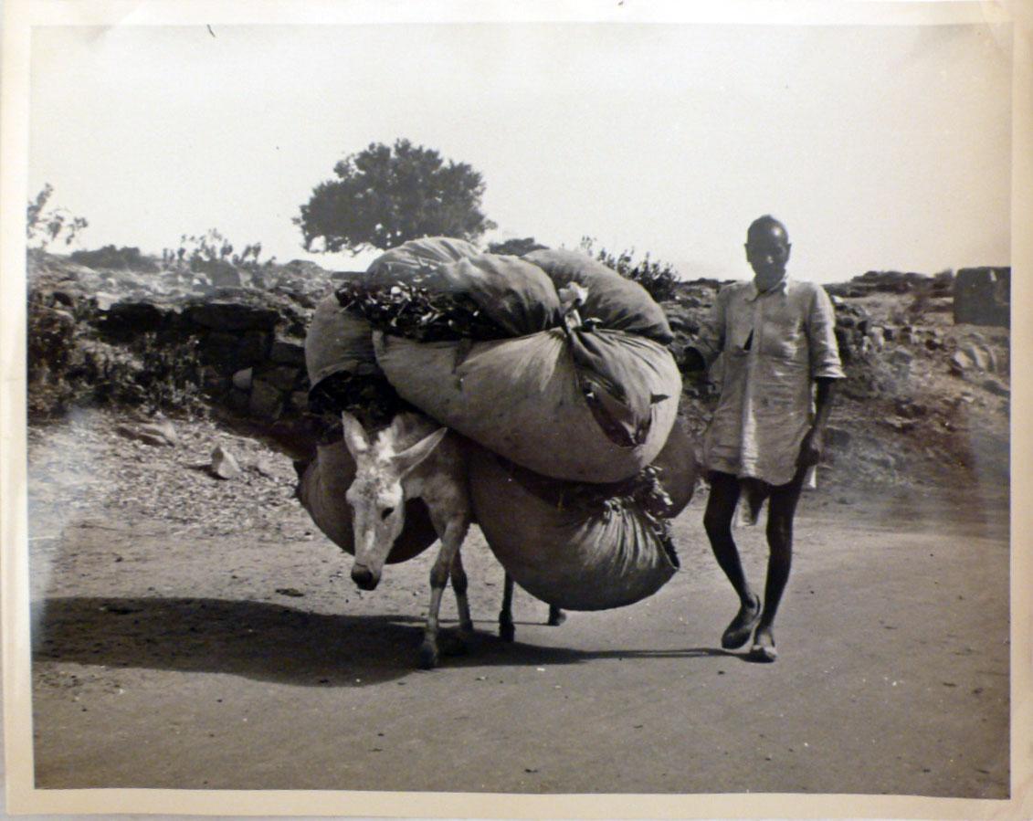 old indian donkey க்கான பட முடிவு