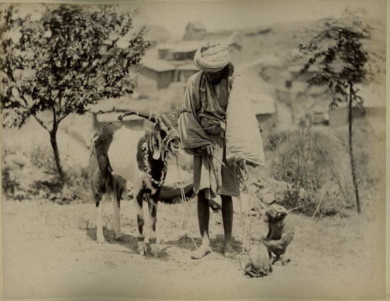 Indian Tamahsa Wallah (Street Entertainer) with his Monkeys and Goat - 1880's