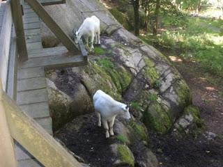 Leisha's Random Thoughts & Ponderings: The Nordic Ark, July