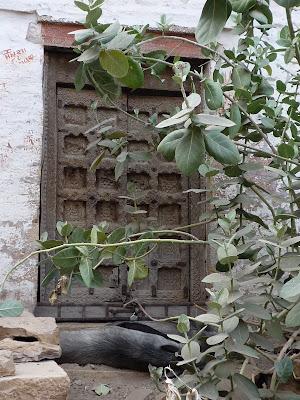 Jaisalmer, la dorée : les temples Jains et le Thar Heritage Museum 17