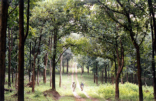 Forest guards patrolling Karnataka's Nagarahole (Rajiv Gandhi) National Park which is a good habitat for woodpeckers