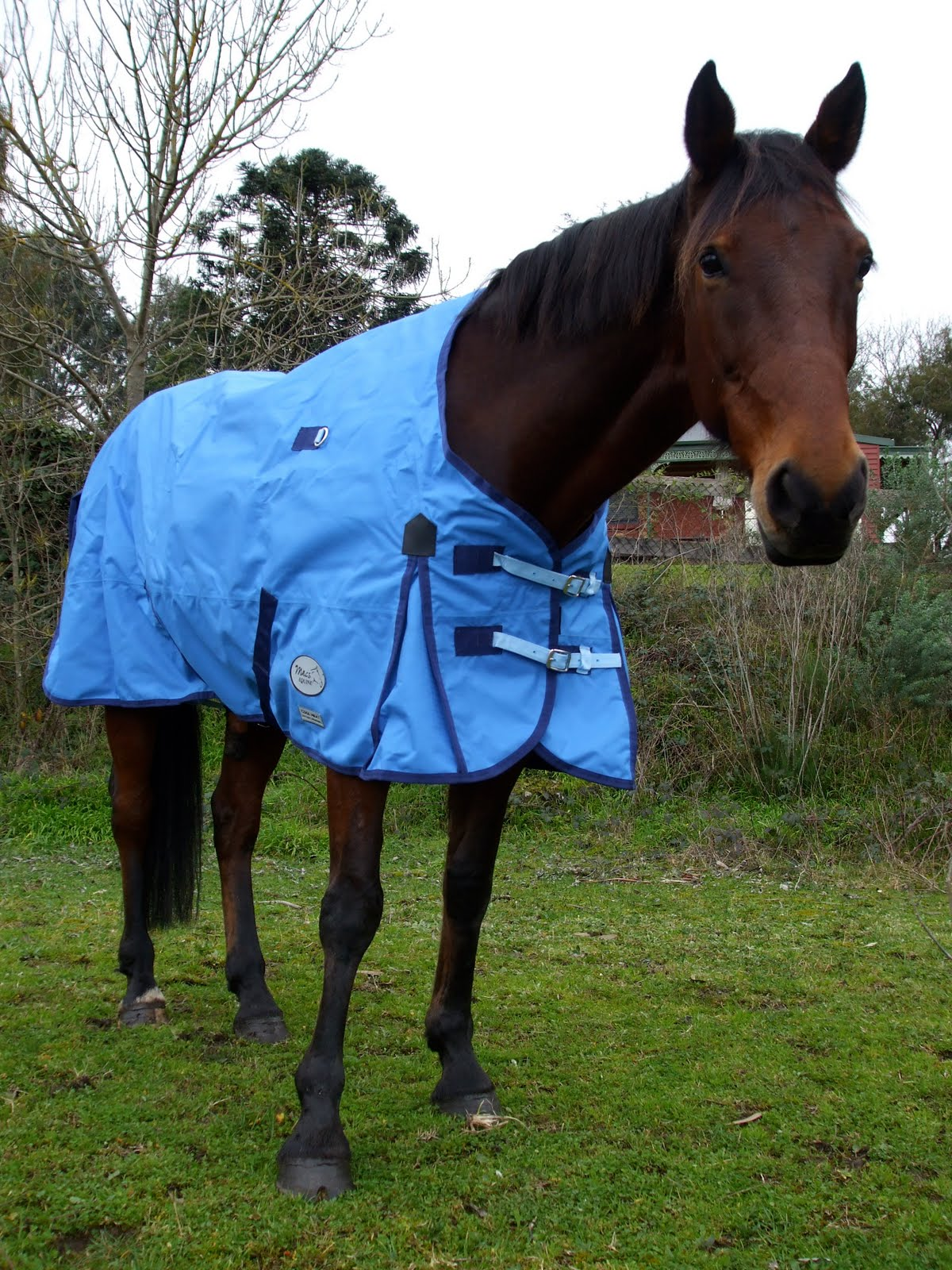 Macs Equine Cool Heat Rug Review