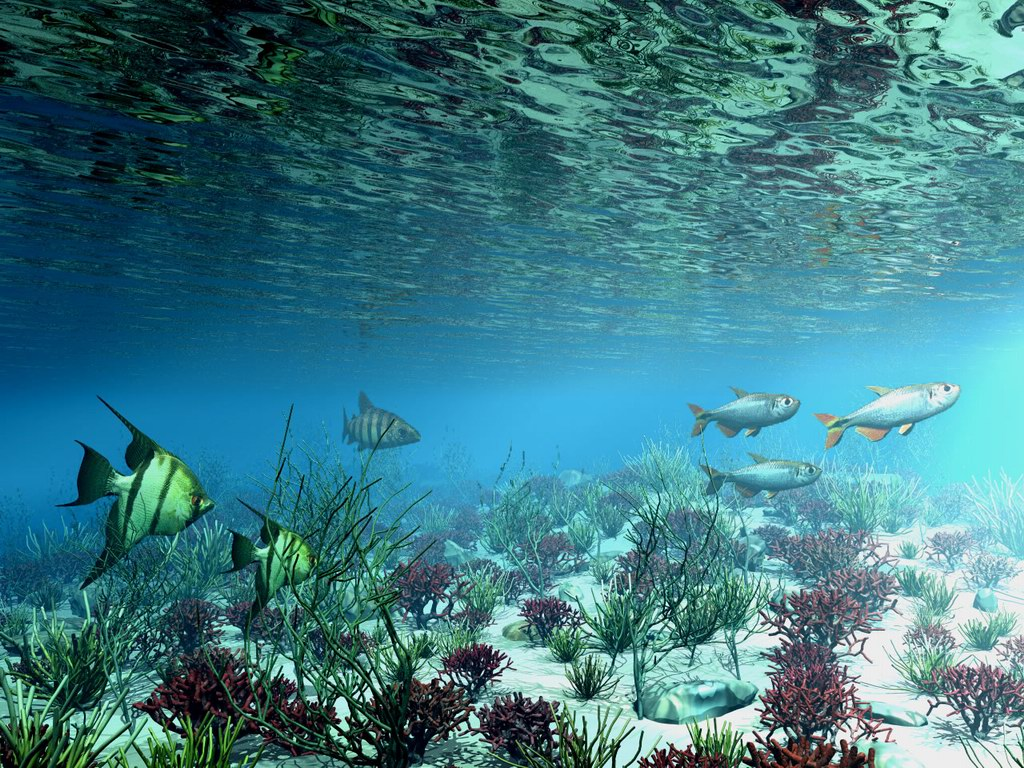 Free wallpicz wallpaper desktop underwater - Underwater desktop background ...