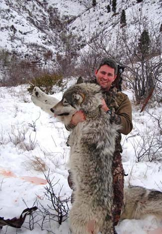 The Westerner The Myth Of The Harmless Wolf