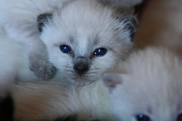 Gatitos Para Regalar Best Animales Tiernos Con Mensajes
