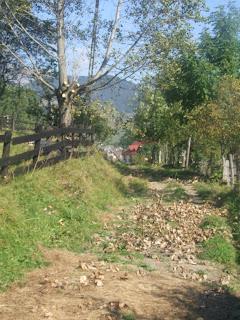 Balkan And Carpathian Musings September 2010