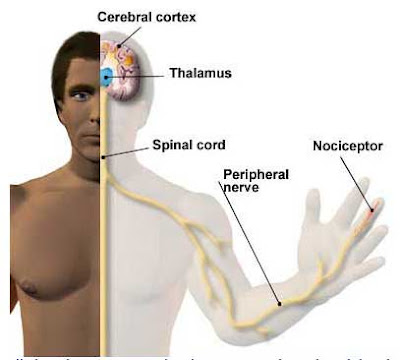 Congenital insensitivity to pain with anhidrosis: What is ...