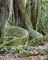 roots - For the Love of Trees....