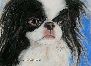 Japanese Chin - Chin-sational By Cori Solomon
