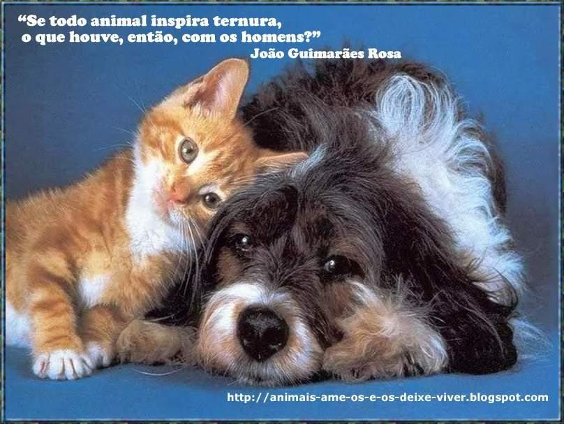 Imagens De Animais Com Frases Engraçadas