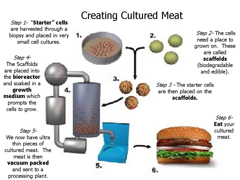 [Image: Creating+Cultured+Meat.jpg]
