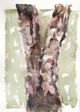 Birch layers