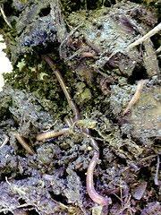 Joan's Journal: Vermicompost Fertilizer: Vermicomposting Made Easy