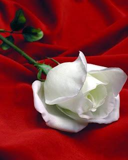 Rosa La Vida Es Una Flor Cuya Miel Es El Amor Para Mi Amiga Rosa