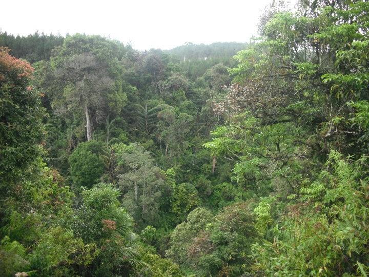 Geo Sintang Blog's: Pemandangan Hutan