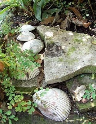 Sea Shell Garden Ideas