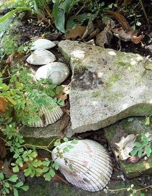 Seashell Garden Ideas Coastal Decor Ideas Interior