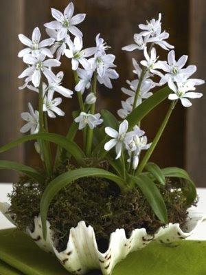Shell Flower Planter