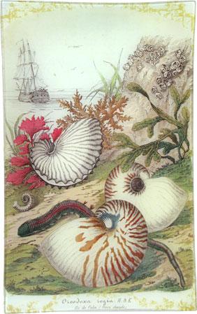 decoupage shell trays