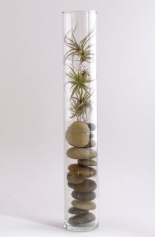 Tillandsias in glass vase