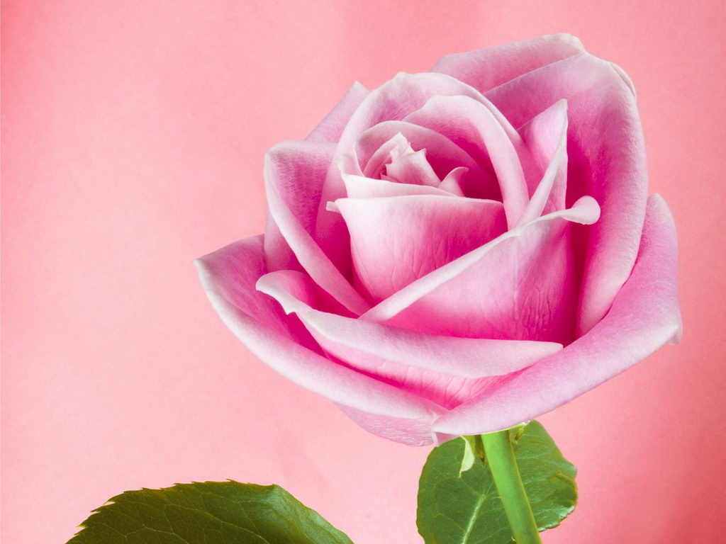 Desktop widescreen wallpapers free download beautiful - Pretty roses wallpaper ...