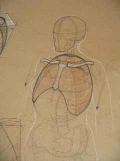 Fig Drawing: The Ribcage