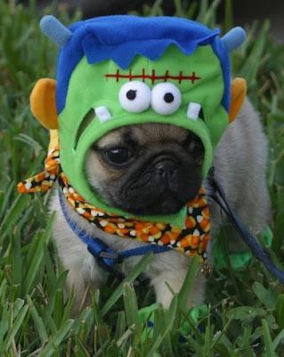 Buggles The Cuttest Pug Puppy On Halloween Cuddleshots