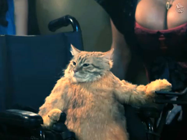 Wheelchair For Cats Modern Chair Rail Recent Trends In Vehicular Cat Humor Ludic Despair