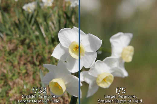 What Are Shutter Speed, ISO, And Aperture Settings?   DSLR ...  What Are Shutte...
