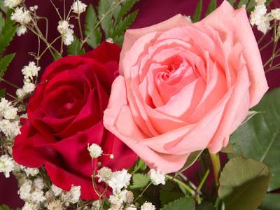 974d806ed ملف كامل عن زراعة الورد والعنايه به - مجتمع رجيم