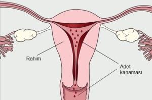 Neden kürtajdan sonra aylık olmaz, ne yapmalı Kürtaj sonrası aylık gecikme