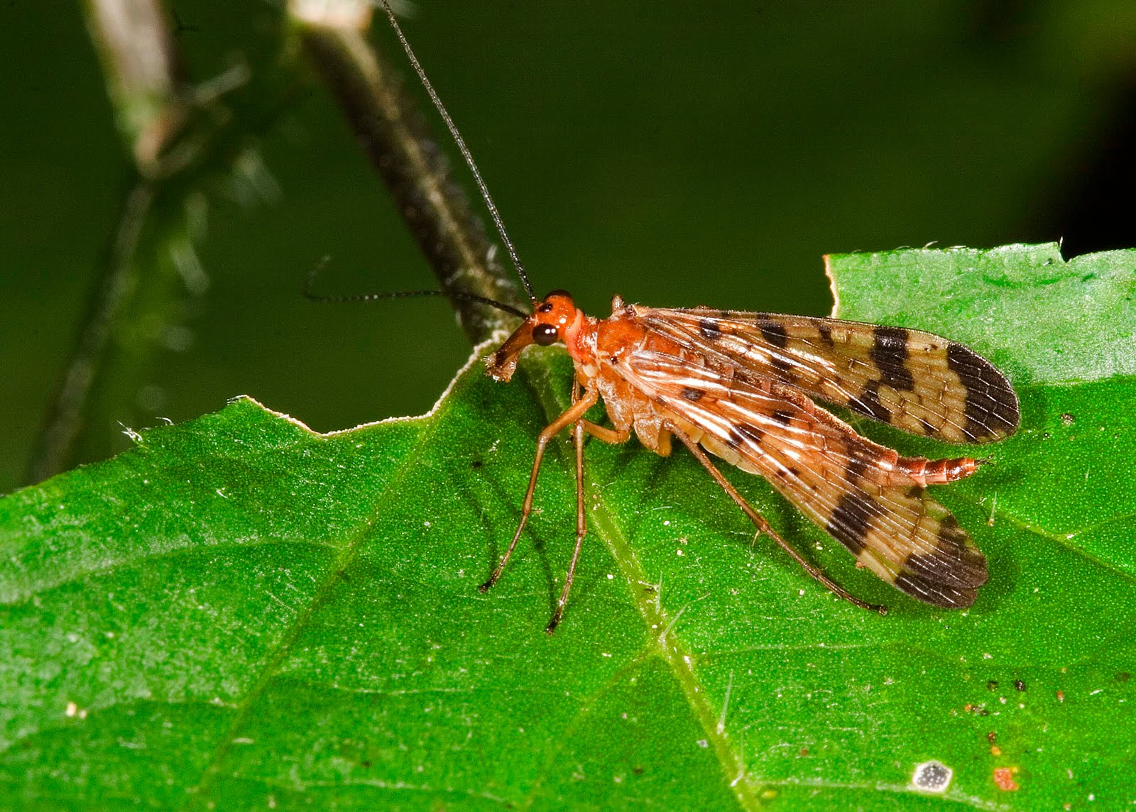 Illinois Natural History Survey: Insect Appreciation - photo#17