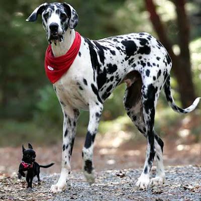 schwerster hund der welt