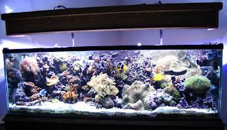 Aquarium Otomatis