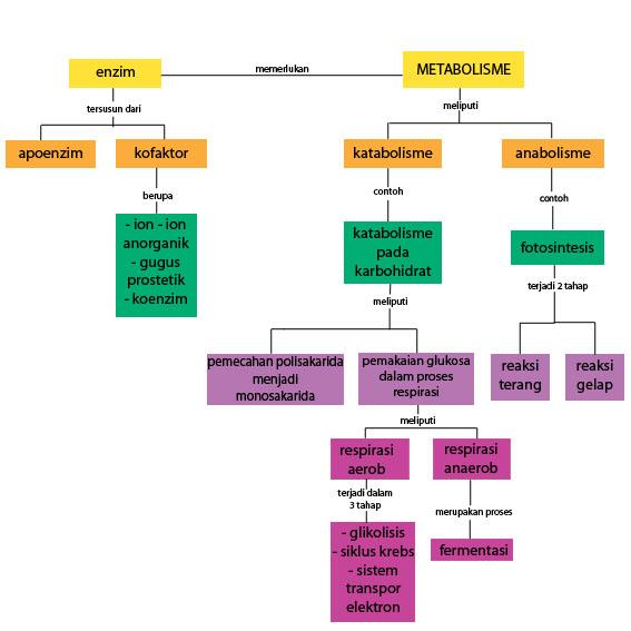 4 Cara Meningkatkan Metabolisme Agar Mudah Langsing